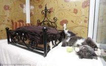 Resort di lusso per gatti: Longcroft luxury Cat Hotel