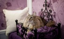 Successo per lhotel a 5 stelle Longcroft Luxury Cat Hotels