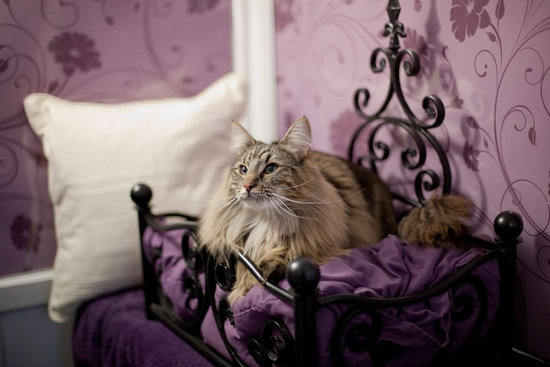 Successo per l'hotel a 5 stelle Longcroft Luxury Cat Hotels