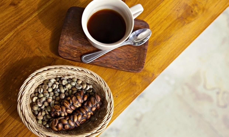 Kopi Luwak caffe chicchi defecati
