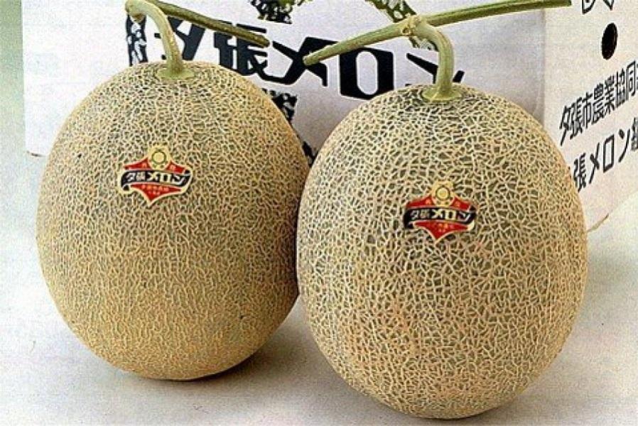 Melone Yubari King