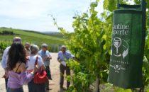Cantine Aperte 2017: levento dedicato agli amanti del vino