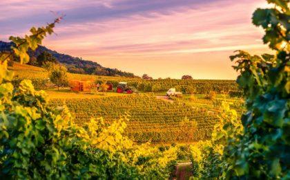 I migliori vini italiani: le bottiglie da classifica [FOTO]