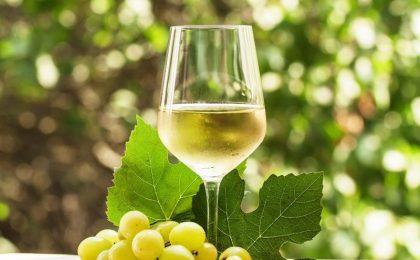 Vini bianchi campani, le bottiglie DOC