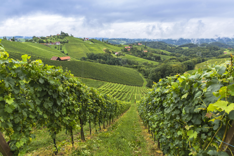 Strade del Vino in Italia: le più belle da percorrere
