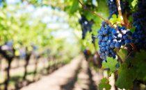 Donne e vino: 5 realtà da conoscere ed apprezzare