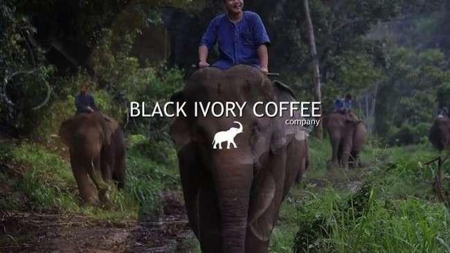 il caffe deriva dalle feci di elefante