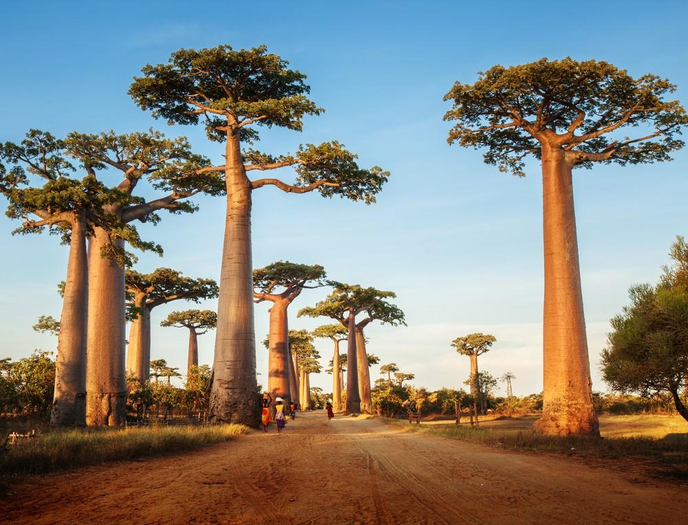 Riserva di Kirindy, Madagascar