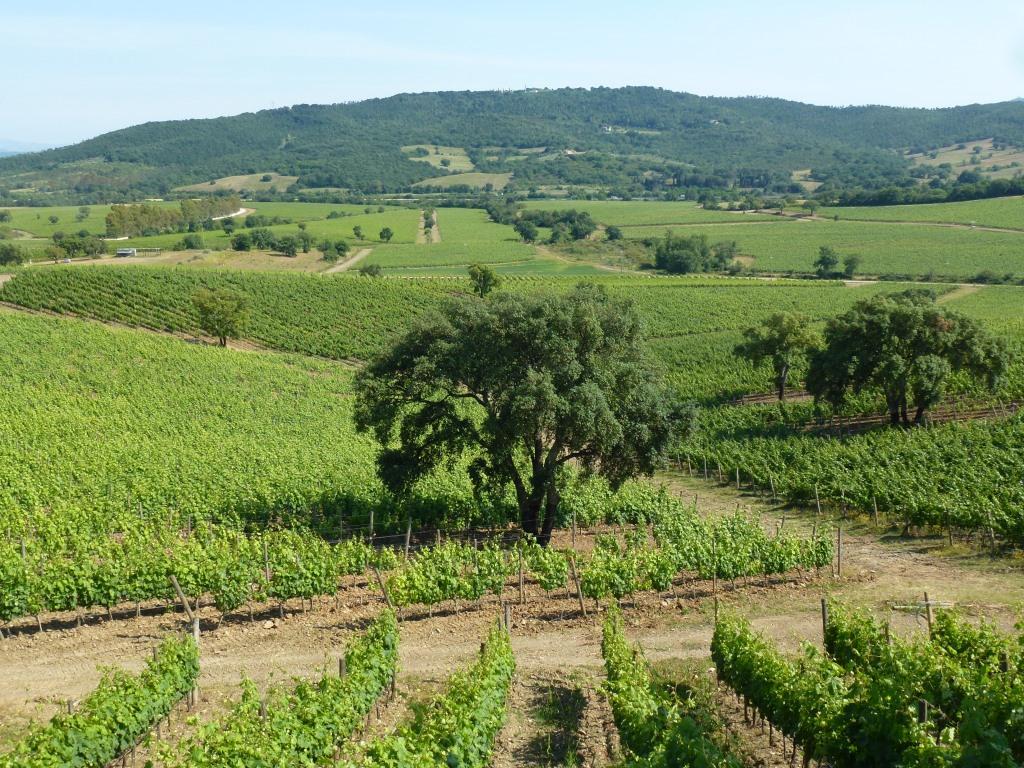 DOC Maremma Toscana 8