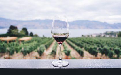 I vini dell'estate: bianchi, rossi e rosè da sorseggiare a bordo mare (e non)