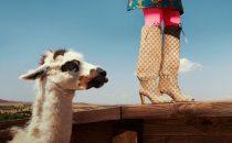Scarpe Gucci 2018-2019: dagli stivali a mocassini e sneakers, i must have per linverno [FOTO]