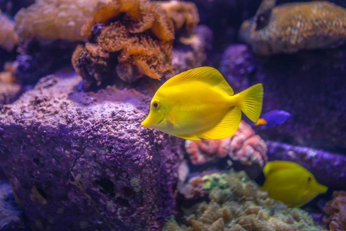 La classifica dei pesci da acquario più costosi al mondo
