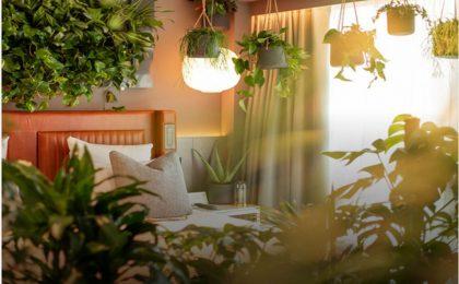 Forest bathing di lusso: un hotel per dormire nella natura